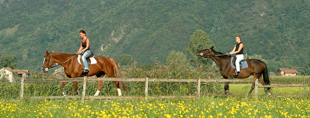 cavallo pian di spagna2